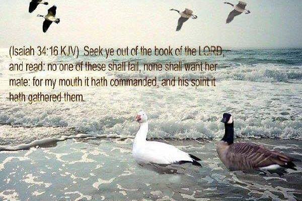 Isaiah 34:16